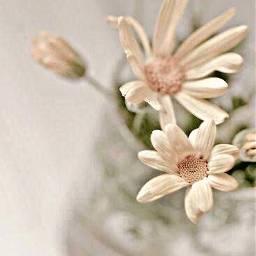 freetoedit hdreffect flowers hazy glass