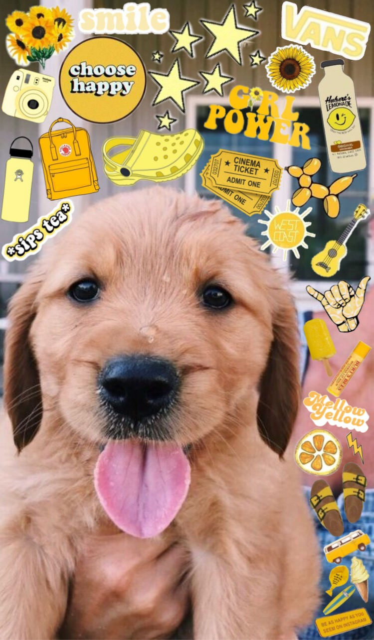 Dog Aesthetic Image By Colby Paul