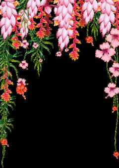ftestickers watercolor flowers tropical border freetoedit