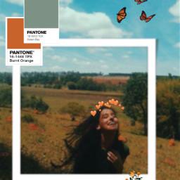 srcretroframe retroframe softedit flowerfields butterfly freetoedit