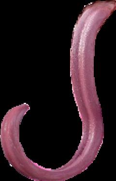 tongue long distorted creepy lizard scary freetoedit