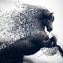 freetoedit horse