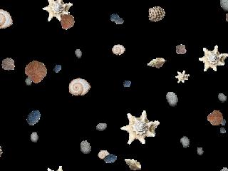 freetoedit ladymc backgroud transparent shells