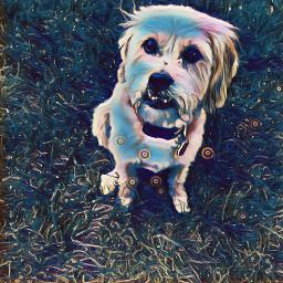 freetoedit dogday cutedoggie bigeyes summertime