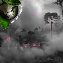 freetoedit amazon amazonforest