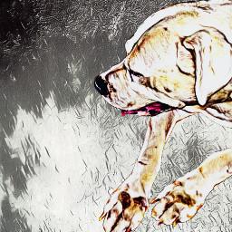 dog dogo dogoargentino wraith animal freetoedit