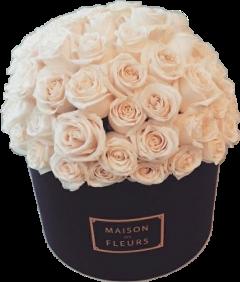 fleurs pot freetoedit