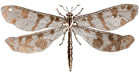 freetoedit dragonfly insect wings beautiful