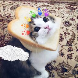 cat bread freetoedit