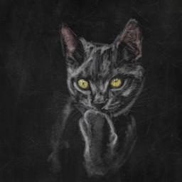 colorpaint draw portrait cat eyes