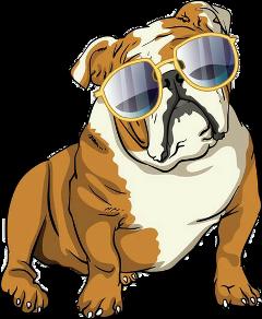 bulldog english tumblr freetoedit