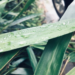 drops dewdrops droplets leaves nature freetoedit