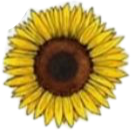 sunflower aesthetic vsco vscoxqueen freetoedit