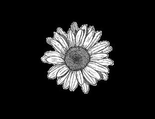 overlay white complex edit aesthetic freetoedit