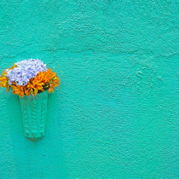 flower flowers wall background backgrounds freetoedit