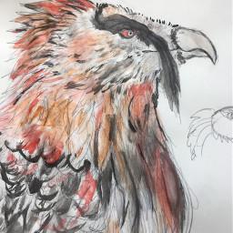 interesting art leafysart myart drawing doodle sketch bird vulture beardedvulture animal painting