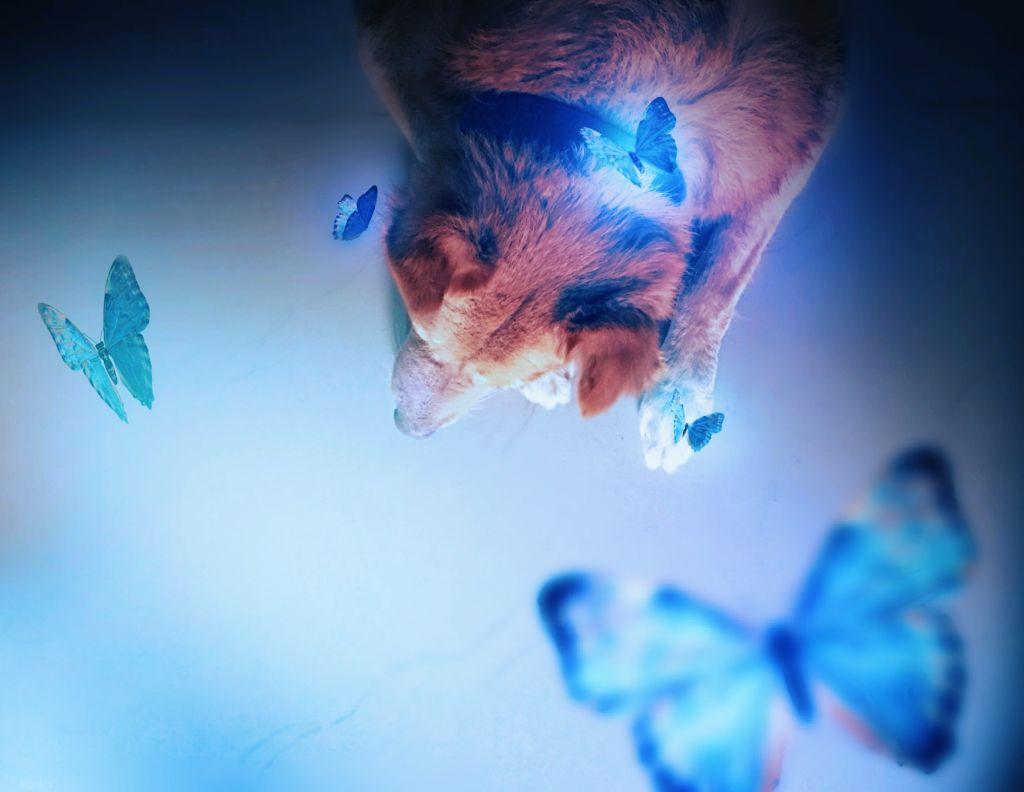 Dog & butterfly #freetoedit #remixit #myedit #makeawesome #picsart #dog #pets
