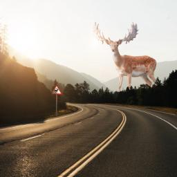 freetoedit deer deerfilter giantanimals giant