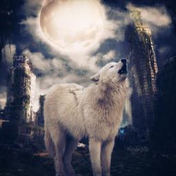 freetoedit myedit city wolf moon