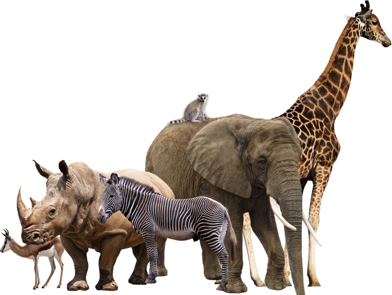 #animals #africa #giraffe #elephant #ftestickers #freetoedit