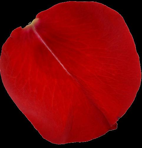 #cuorelucymy #Lucymy #mialu #wow #rosa #petali #red #petalo