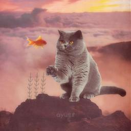 freetoedit grasses goldfish cat mountains