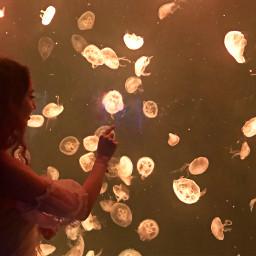 freetoedit aquarium shanghai jellyfish