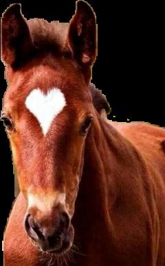 конь лошадь🐴 freetoedit лошадь