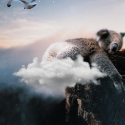 giantanimals koala surreal nature beautifulnature freetoedit ecgiantanimals