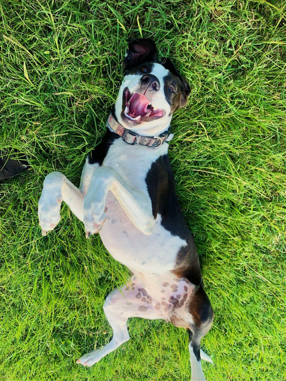 My Lovely Pup Leia💖 #dog #pets #dogsofpicsart #interesting #leia