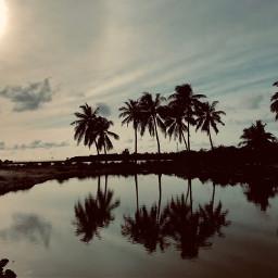island beauty maldives coconutpalm naturesbeauty freetoedit