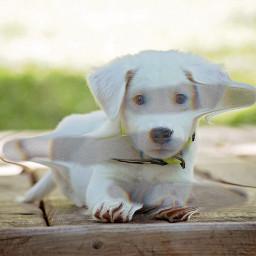 freetoedit dog plrd polaroid polaroidphoto