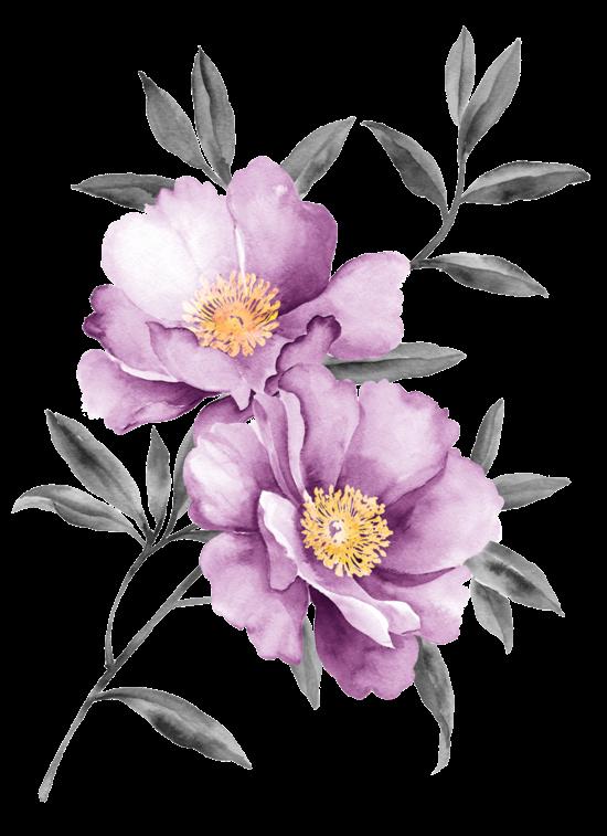 #flower #flowers #flores #flor #purple #aesthetic #watercolor #acuarela #auarella #aquarelle #rose