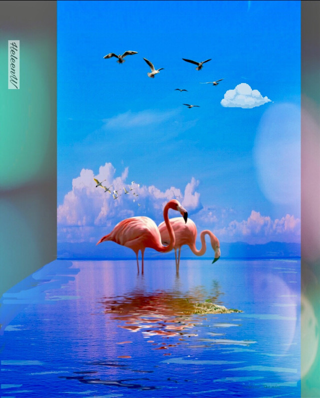 #fantasyart #madewithpicsart #picsarttools #editedbyme #colorful #flamingo #water #maskeffect #becreative #digitalart #myedit #myart #mystyle #freetoedit