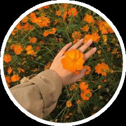scorange orange freetoedit