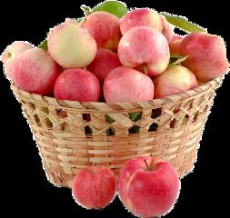 freetoedit apples basket fruit juicy