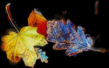 freetoedit scautumnleaves autumnleaves