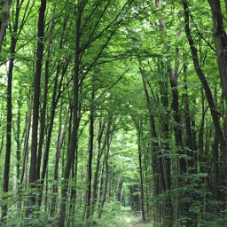 photography nature forest trees freetoedit