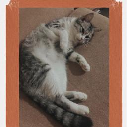 freetoedit cat catlover frame