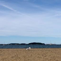 seagull horizon beach freetoedit
