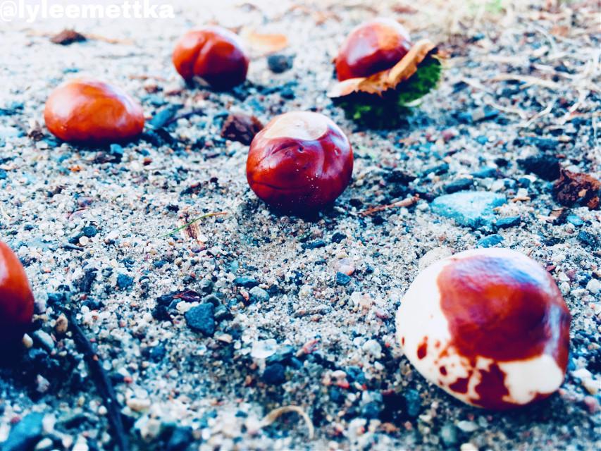 #myphotography #chestnuts #chestnut #brown #white #brownandwhite #stones #sand #nature