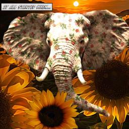 freetoedit sunflowers elephant humor