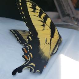 pcminimalism minimalism butterfly freetoedit
