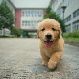 freetoedit tumblr doge pretty cute