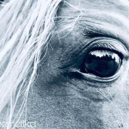 horse blackandwhite gray white black