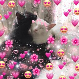 freetoedit amor gatos jingjang amorgatuno😺😻