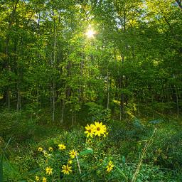 landscapephotography freetoedit remixit green nature