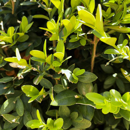 pcleaves leaves green tree branch