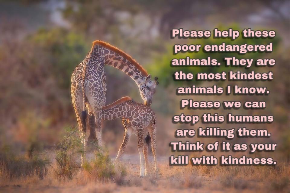 Help all of the endangerd animals make them live a happy life #savetheworld #savegiraffes #helpanimals #freetoedit