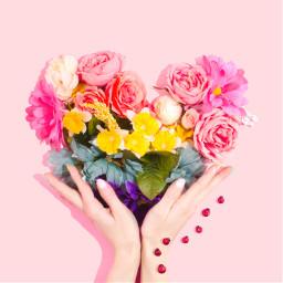 flower flowers hand heart hearts freetoedit